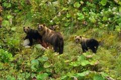 Итурупские медведи