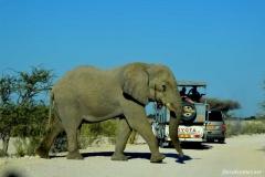 Африканский-слон